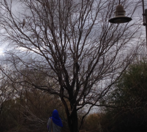 muslim woman standing before a tall tree with a large bird concealed within the branches