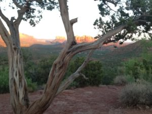 A sparse tree in the fore ground and Sedona landscape behind