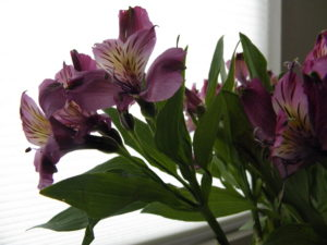 purple garden flowers in a vase